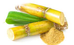 Cholesterol supplements - policosanol